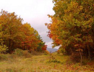 Синеморец през есента